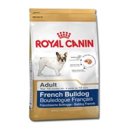 Royal bulldog francese