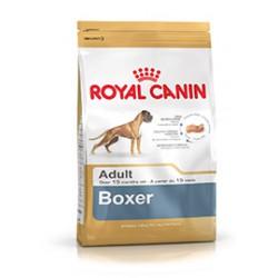 Royal boxer