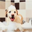 Deodoranti, schiume e shampoo