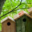 Accessori uccelli liberi