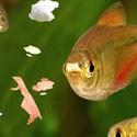 Alimentazione pesci