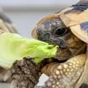 Alimentazione tartarughe